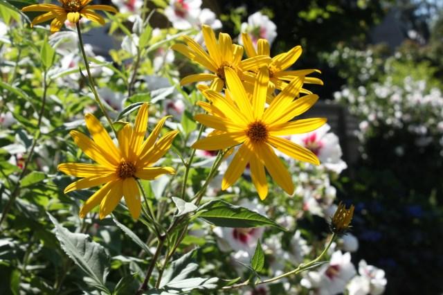 JA flowers